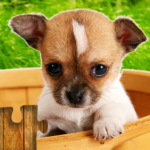 Dogs Jigsaw Puzzles Game – For Kids Adults 25.1 APK MOD