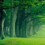 Forest Jigsaw Puzzles MOD Unlimited Money