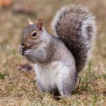 Squirrels Jigsaw Puzzles MOD Unlimited Money